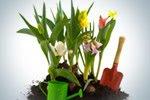 Vastu Shastra for garden